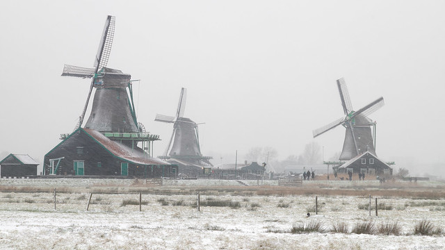 It is snowing at the windmills on the Zaanse Schans