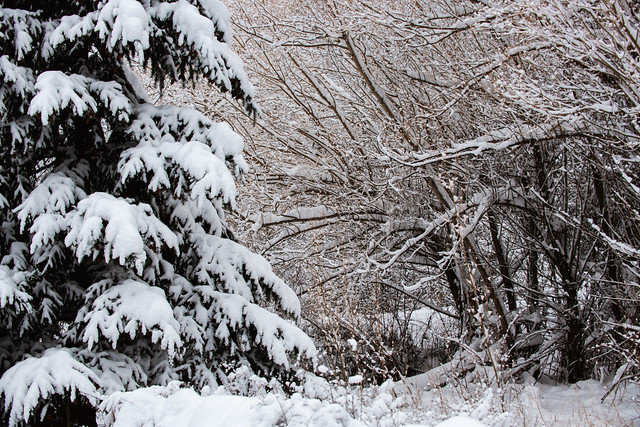 Oregon Snow - Backyard Parkdale Oregon