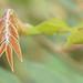 Leaves_00011