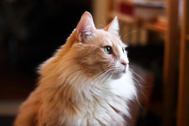 super beautiful Winston