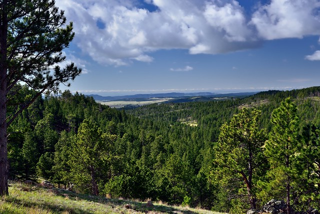 A Hillside of Trees Under Skies of Blue (Wind Cave National Park)