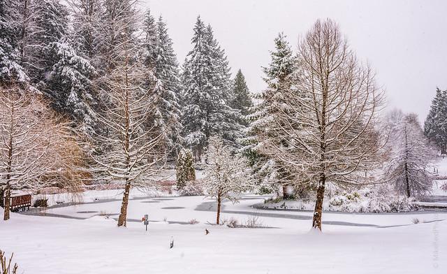 Winter Nursery