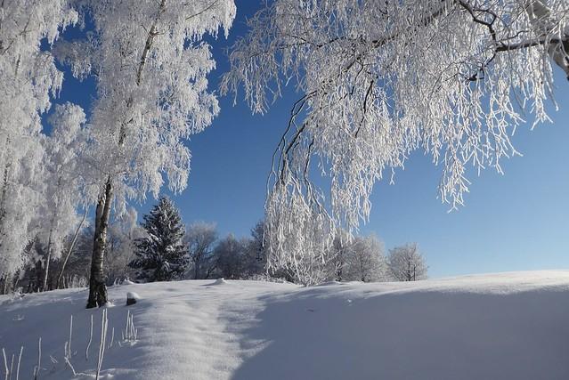 Der Winter zeigt wie magisch die Natur ist 💕