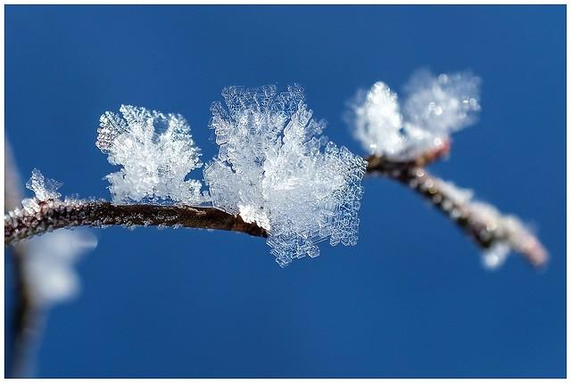 Winter-2021-3