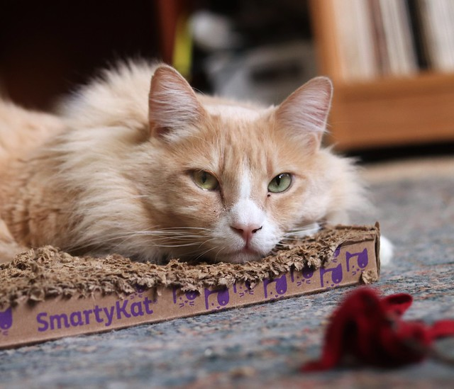 SMARTYKAT for Cat Scratcher