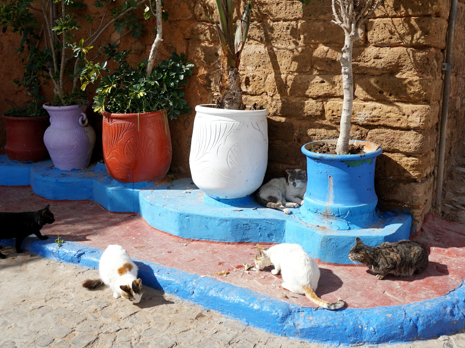 cats in Kasbah Rabat