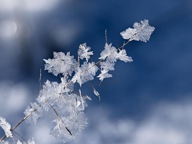 Ice flowers - Blüten aus Eis