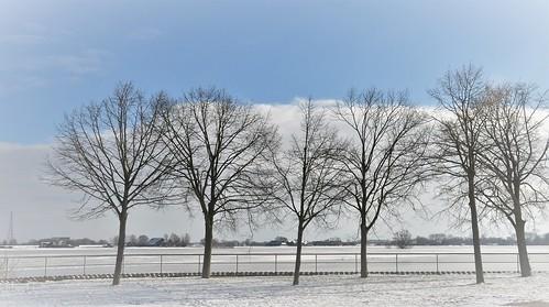 winter vinter hiver inverno bomen trees arbres alberi bäume sky clouds sneeuw snow neve neiger hoenwaard hezenberg landschap landscape landshaft view scenery scenario schaduw uitzicht hattem nederland niederlande nikond90 netherlands natuur nature natur naturaleza holland holanda paysbas paesibassi paísesbajos europa europe outdoor wilmahw61 wilmawesterhoud tmt nwn