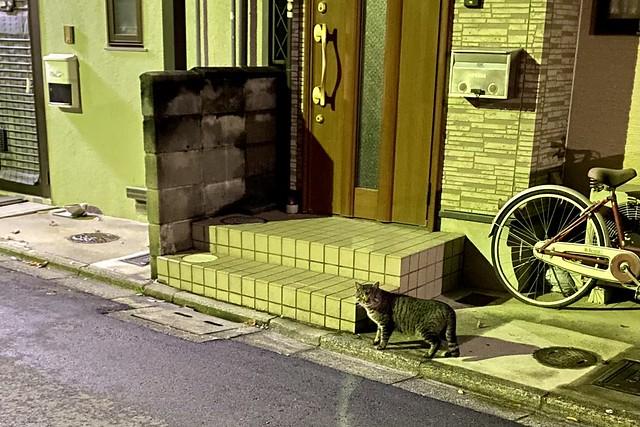 Today's Cat@2021−02−15