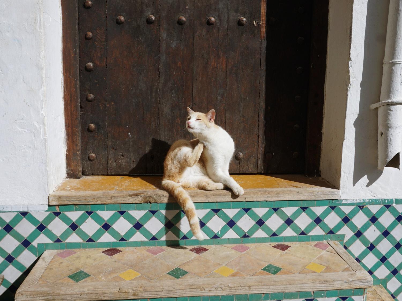 Rabat Kasbah cat