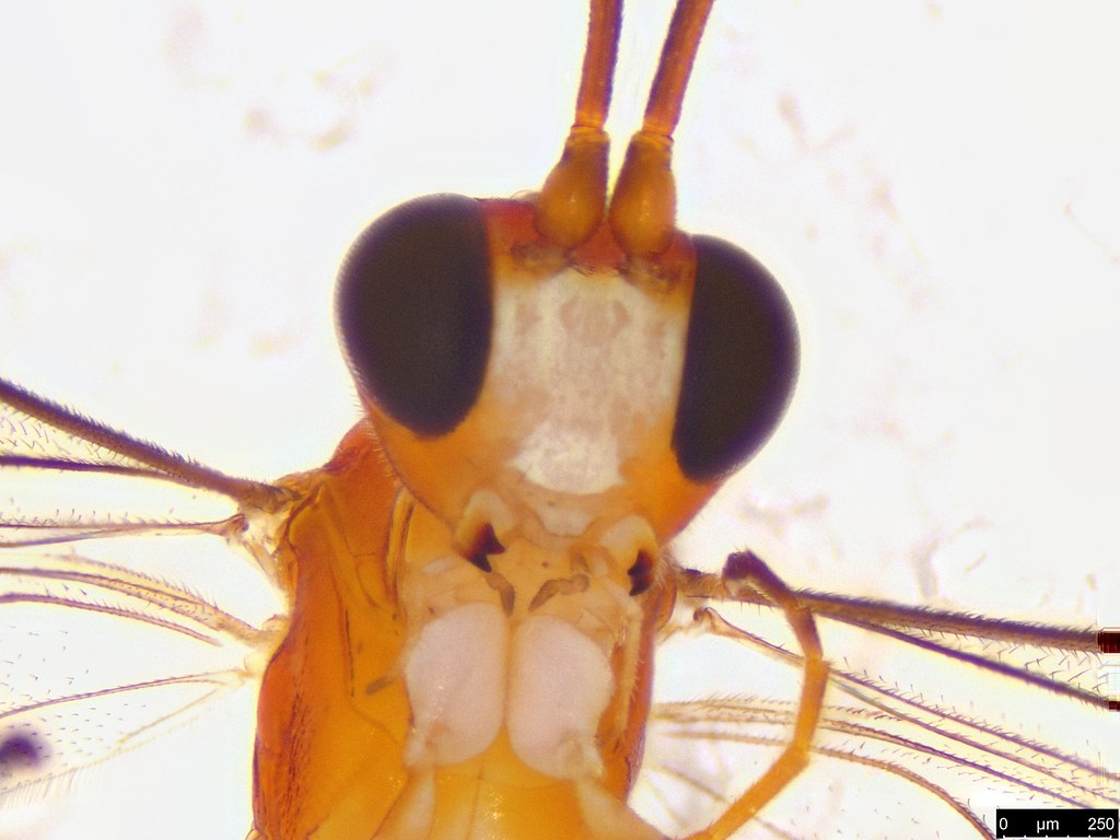 25b - Ichneumonidae sp.