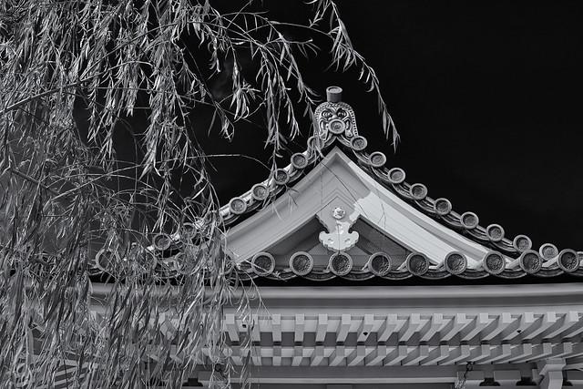 Sanjusangen-do (三十三間堂) willows