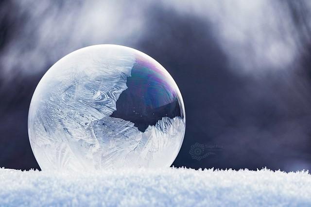 Frozen Bubbles / gefrorene Seifenblasen