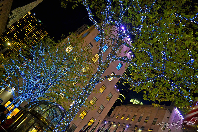 Twinkling Trees in Rockefeller Center Midtown Manhattan New York City NY P00804 DSC_9916