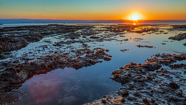 Davenport Landing tide pools