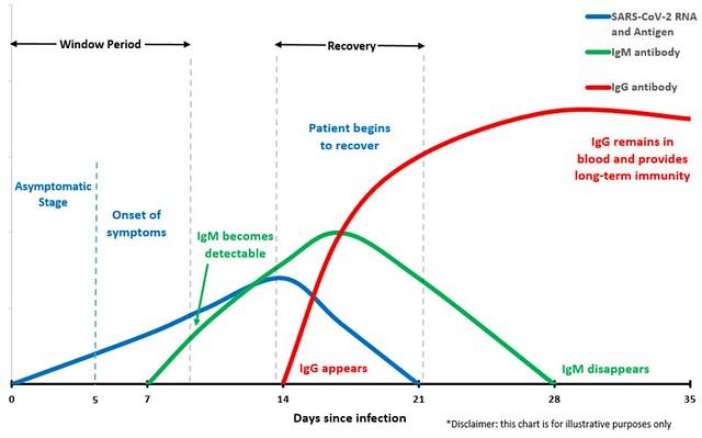 Persistenta in corp a virusilor si eliminarea lor in timp