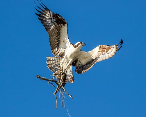birds bir flight sky
