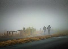 Morning Stroll in the Fog