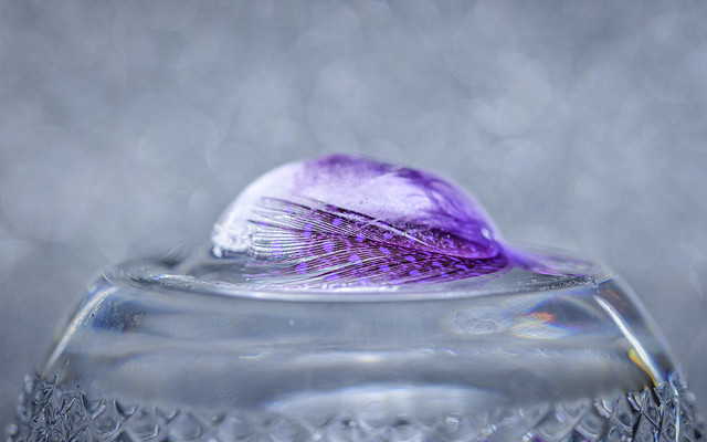 iced feather