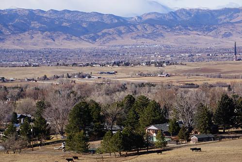 cows cattle farm farmland mountains valley