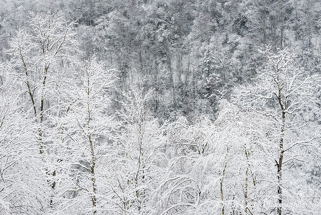 White on Grey