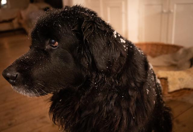 Snow-dog (someone, hand me a towel)