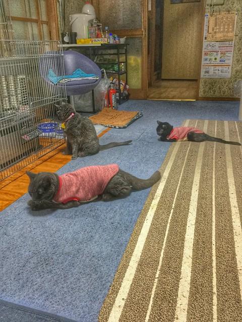 Three Most Senior Cats