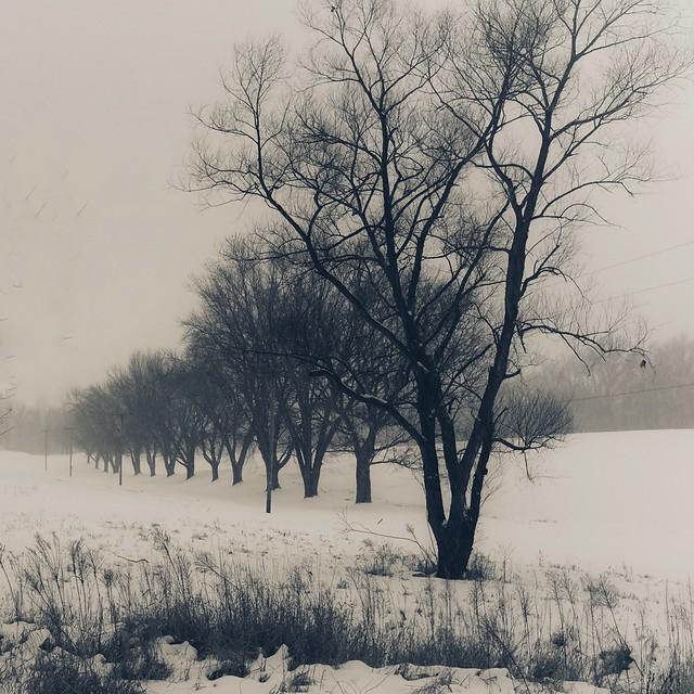 Rural Scene 3