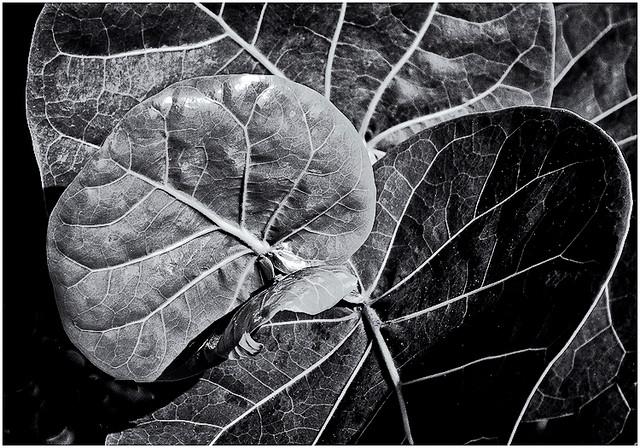 Abstracto Natural (Natural Abstract)