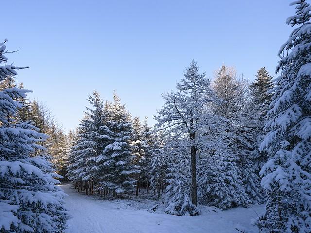 Winter Wonderland - Bavaria
