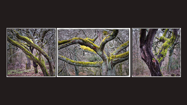 woodlands triptych (1/2)