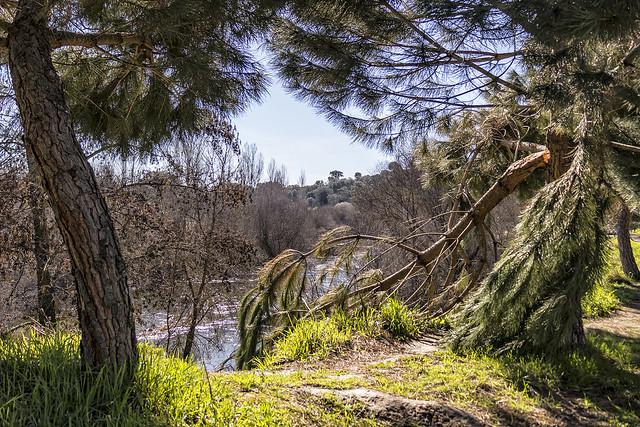 Baja el río Manzanares