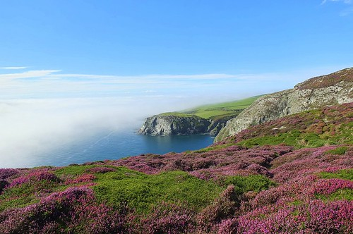 spanishhead isleofman iom heather landscape landscapephotography mist fog weather manx ellanvannin seascape sky clouds explore explored inexplore