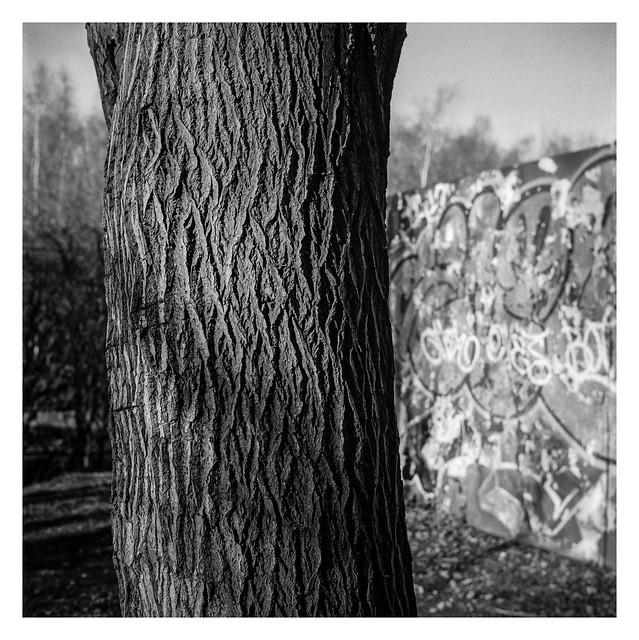Tree and graffiti