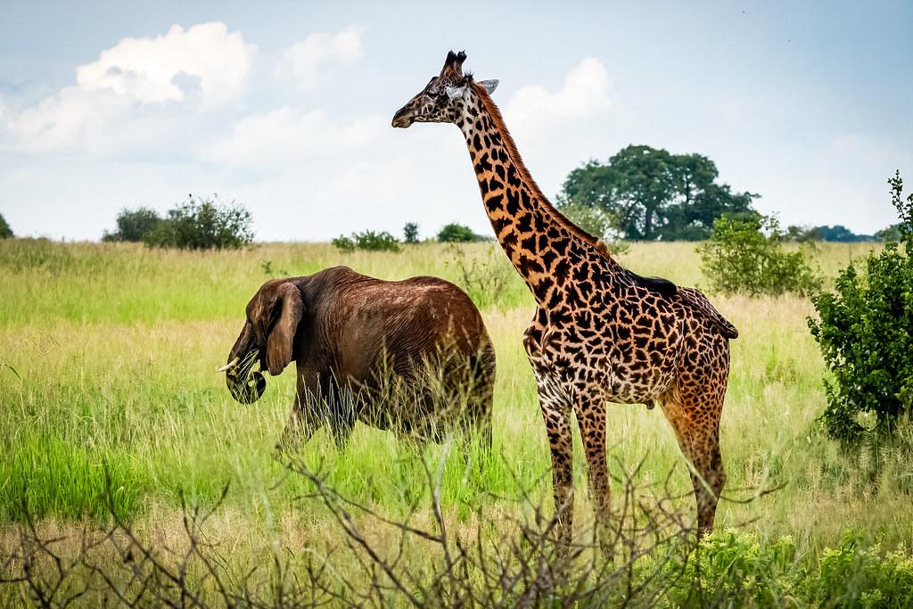 Tarangire wildlife