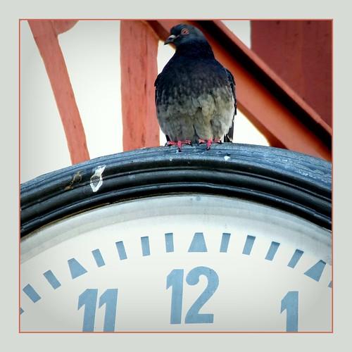 album4 aufgenommenam21märz2018 deutschland dzsmd035 dzsmd470 flickr kodakpixproaz421 lesezeichen märzwinterlicht quadrat schaumada senkrechtes tauben trier uhr vögel vertikal