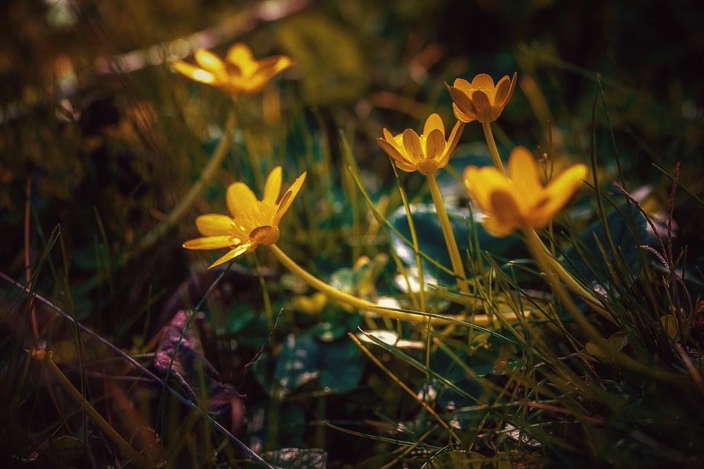 Des fleurs sans toi...