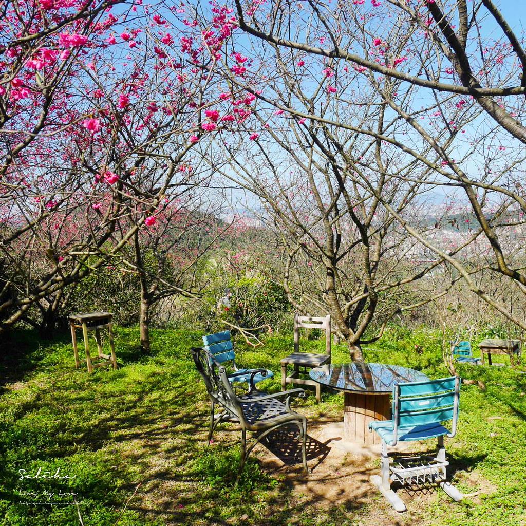 台北景點推薦台北景觀餐廳賞櫻景點騰龍御櫻景觀咖啡廳可看101景色超棒 (4)