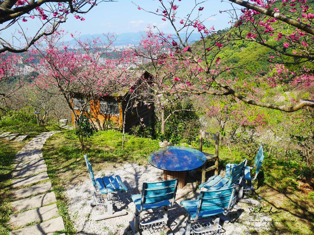 台北一日遊櫻花景點騰龍御櫻花林景色很棒的平價景觀餐廳咖啡廳下午茶 (1)