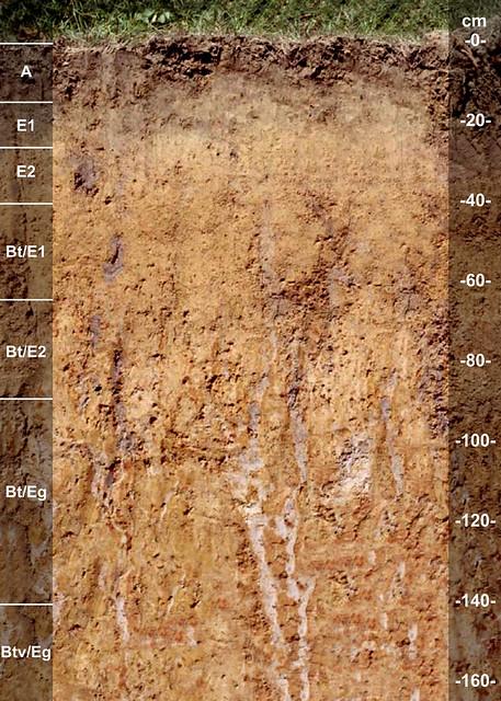 Kirbyville soil series