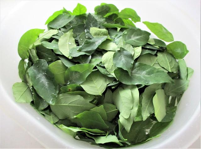 Cangkok manis leaves
