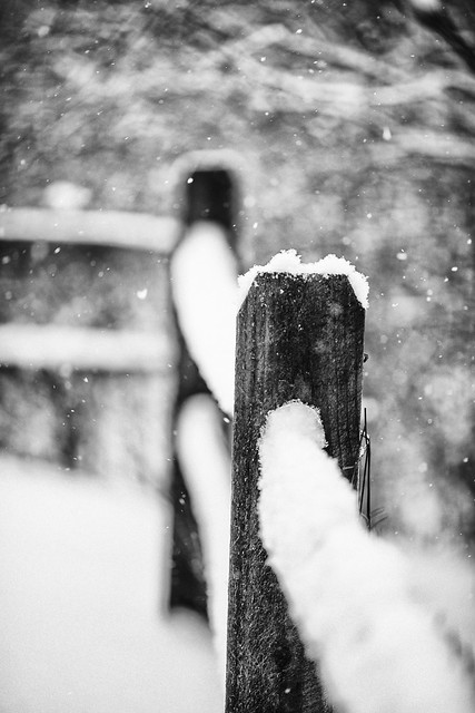 47/365 - Snowy Fence Posts