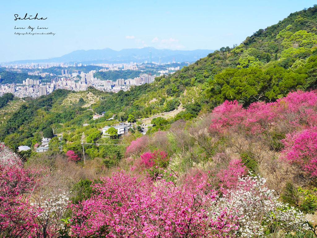 新北台北景觀餐廳推薦騰龍御櫻披薩義大利麵可看101風景好平價景觀餐廳 (5)