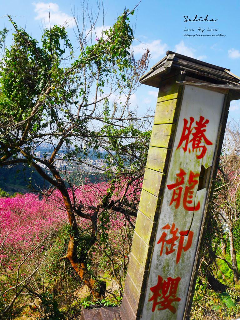 台北一日遊櫻花景點騰龍御櫻花林景色很棒的平價景觀餐廳咖啡廳下午茶 (2)