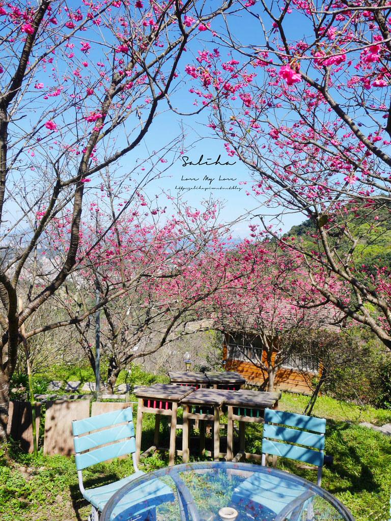 新店景觀餐廳看櫻花風景好騰龍御櫻 披薩咖啡廳下午茶輕食賞櫻踏青 (3)
