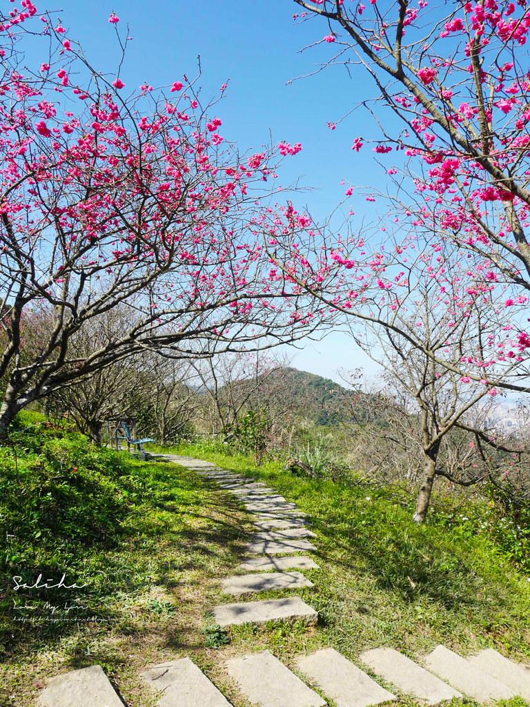 台北景點推薦台北景觀餐廳賞櫻景點騰龍御櫻景觀咖啡廳可看101景色超棒 (3)