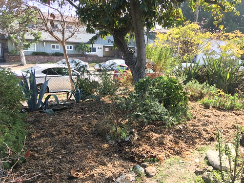 Front yard mulched | by RobotSkirts