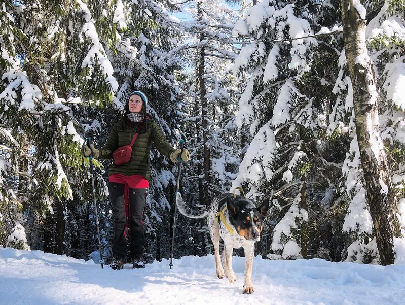 zimą górach pies