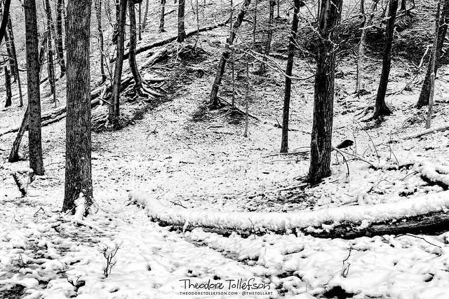 Snowy Woodland BW by Theodore Tollefson Fine Art Photography
