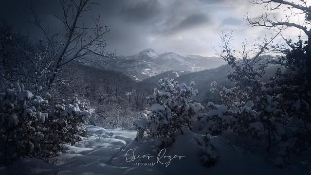 Filomena Winter